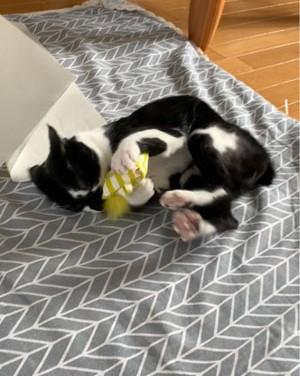 S様宅の猫ちゃん.jpg