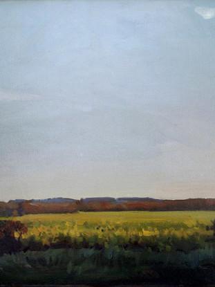 Campos de mostaza en Willshire