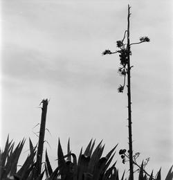 Nijar, 1970