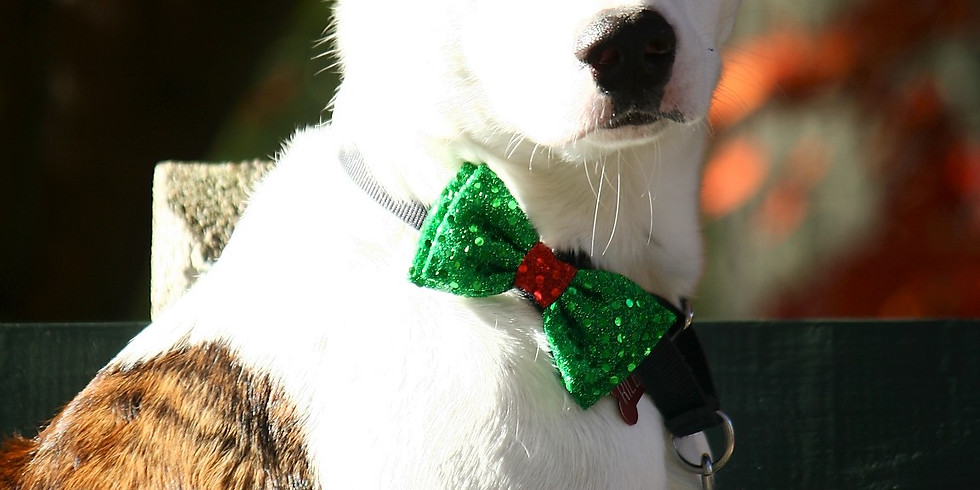 Holiday Pet Photos [1-1:15 PM Time Slot]