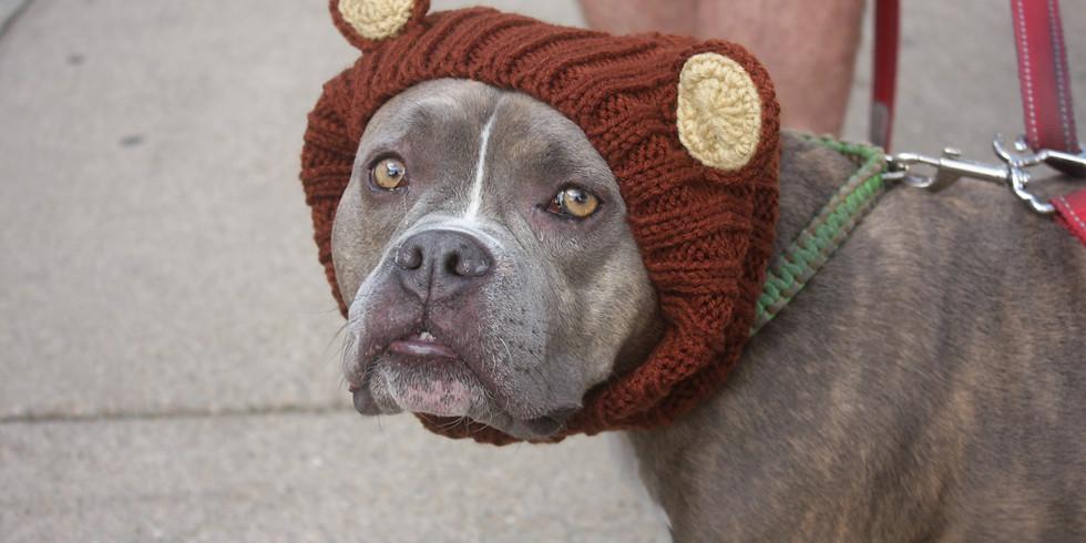 Holiday Pet Photos [2-2:15 PM Time Slot]