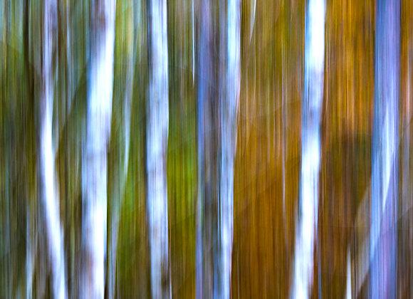 Im Grauerlenwald