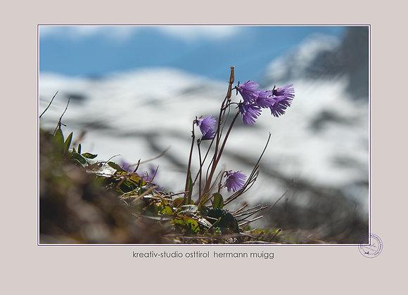 Meditatives Wandern & Fotografie