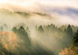 Herbstnebel im Teutoburger Wald