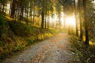 Wanderwege Teutoburger Wald