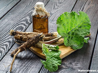Burdock Root Nutrition Facts and Health Benefits