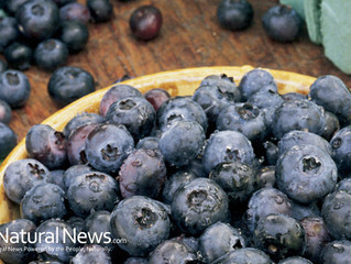 10 Foods That Boost Your Focus and Memory