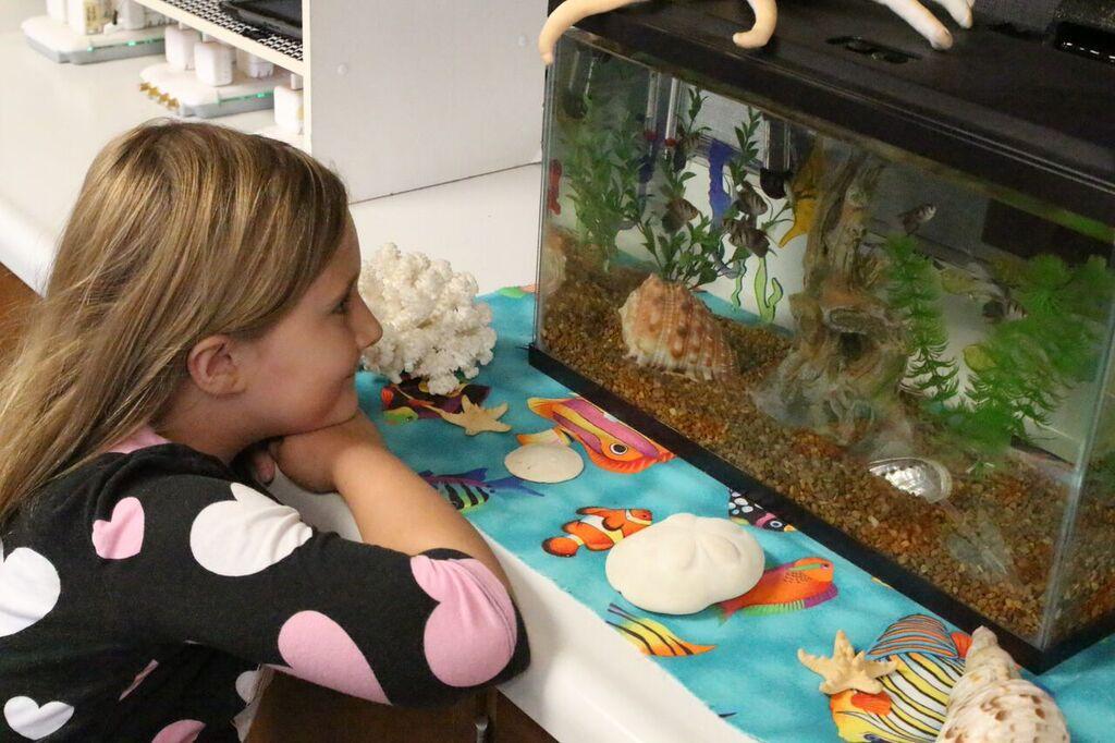 student watching fish