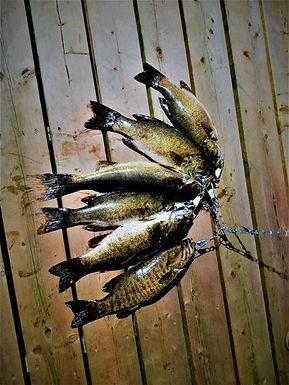 Six Fish.jpg