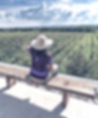 3914-gemd-guanajuato-la_ruta_del_vino_y_