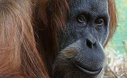 Portrait Monkey