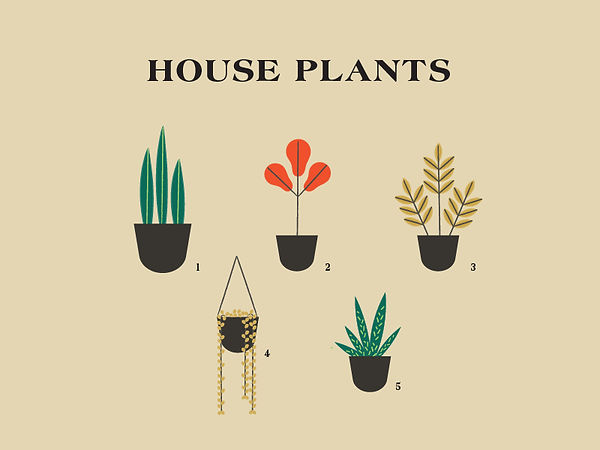 HousePlants_Collection.jpg
