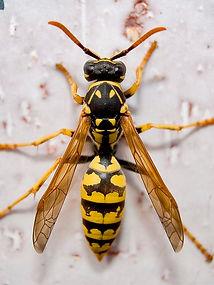 wasp inspo.jpg
