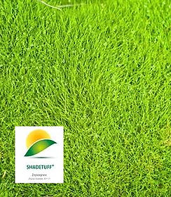 Matrella, Zoysia, Shadetuff Turf NT, Turf, Darwin, Buy Turf, Garden, Lawn, Lawn Variety, Grass, Grass Variety, Tropical, Middle POint, Palmerston, Zuccoli, Irrigation,