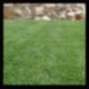 Empire Zoysia Japonica, Turf NT supply turf, lawn darwin, turf dawin, humpty doo, Turf NT Darwin turfnt.com.au Darwin lawn grass turf