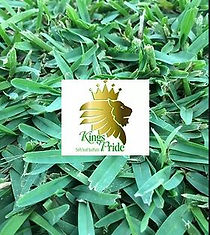Kings Pride, Buffalo, Turf NT, Turf, Darwin, Buy Turf, Garden, Lawn, Lawn Variety, Grass, Grass Variety, Tropical, Middle POint, Palmerston, Zuccoli, Irrigation, Alice Turf, Alice Springs