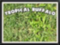 Turf Darwin, Lawn, Carpergrass, nt, Northern Territory