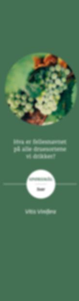 GroennStripe_Forsiden.png