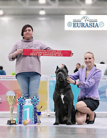GO AND WIN FOR BIG BET OLIMPIUS PRIDE 🔹 CHAMPION OF EURASIA - 2021 🏆 🔸 BREED WINNER - 2021 🏆