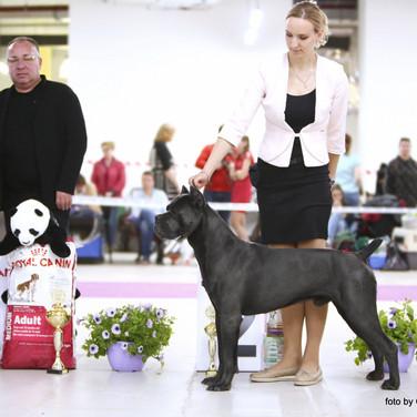 Аттила (16 мес.) - Чемпион России
