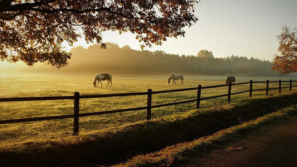 horses-5716127_1920.jpg