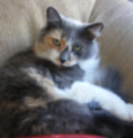 Mercedes, Barbara's beloved cat