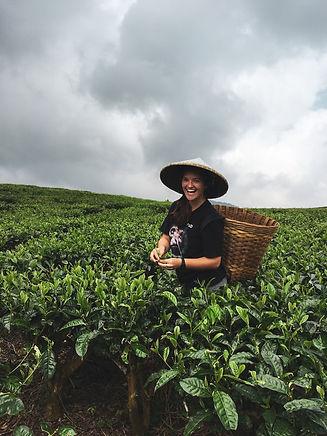 Jess_Picking Tea.jpg