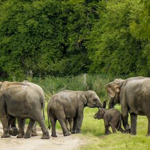 The Elephant Gathering, Sri Lanka.