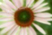 Bloom (5).jpg