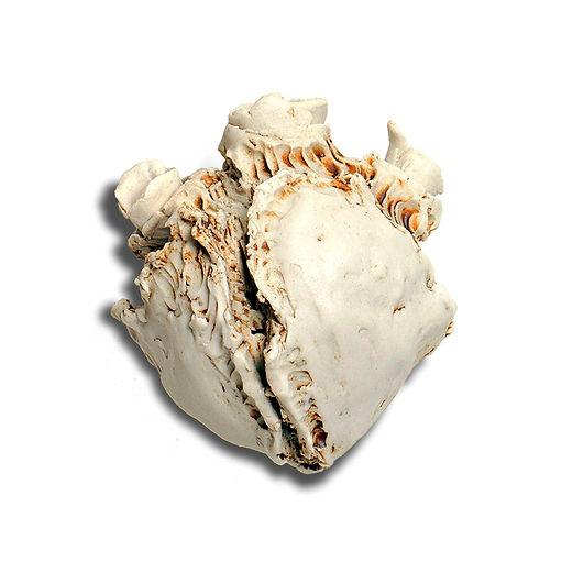 Bone Heart.jpg