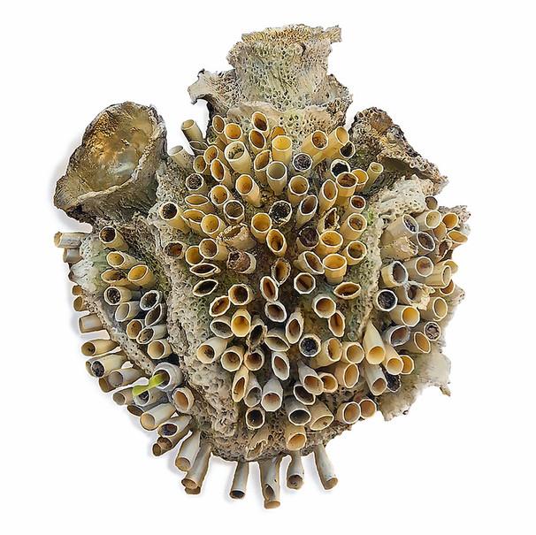 Tidal Heart (tiparillo) (sold)