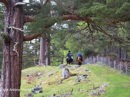 Enjoy Spring activities near Aviemore