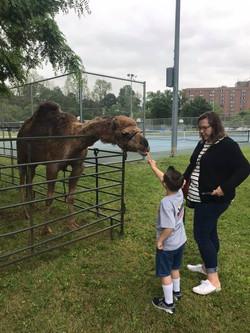 feeding camel.jpg