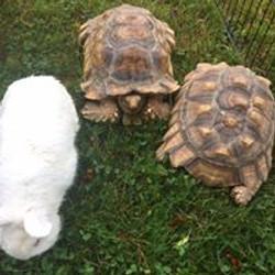 Zoo turtles.jpg