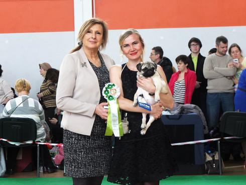 21 января 2018 г. Екатеринбург Монопородная выставка собак породы МОПС Эксперт Гаврилова Я.А. Импери
