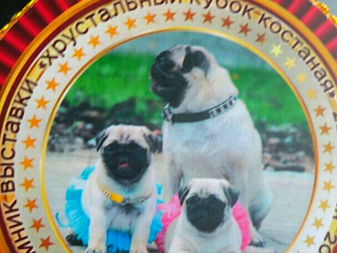 28 апреля 2018 КАЗАХСТАН Национальная Выставка собак всех пород *Хрустальный кубок Костаная-2018*Экс