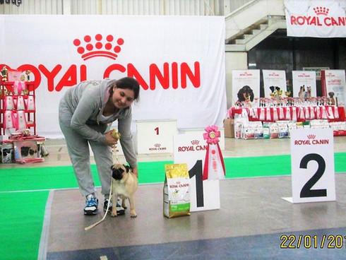 Монопородная выставка собак Ранг ПК