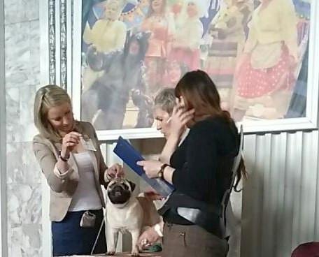 13 мая 2018 г.   г. Ленинск-Кузнецкий Выставка собак всех пород           *ЧЕРНОЕ ЗОЛОТО -2018*
