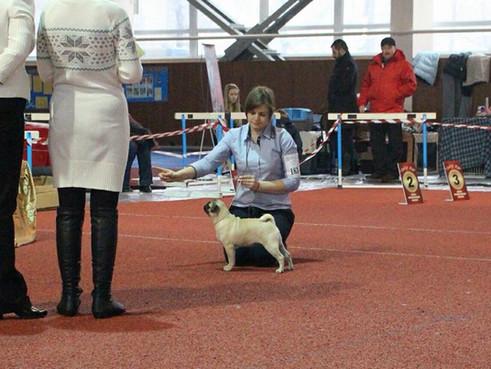 """Национальная выставка собак """"Зимний кубок"""""""
