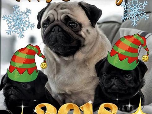 Питомник *ИМПЕРИЯ ЗВЁЗД* поздравляет Всех с наступающим Новым 2018 годом! Желаем Вам в грядущем году