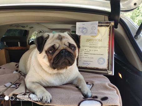 15 марта 2020                                      Выставка собак всех пород *КУБОК УРАЛА* Эксперт С