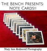 Bench Cards.jpg