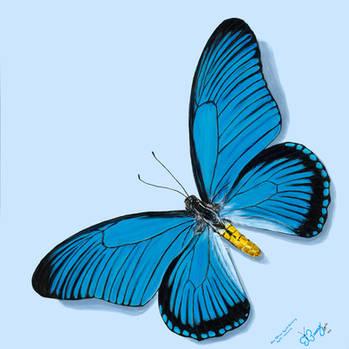 Blue African Papilio Birdwing