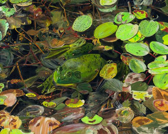 New England Pond with Bullfrog