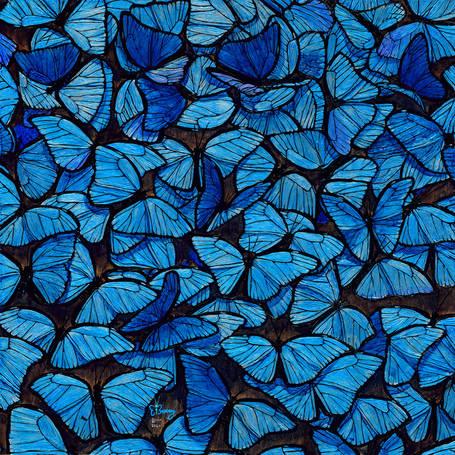 Morpho Flutter