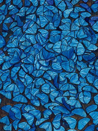 Morpho Kaleidoscope