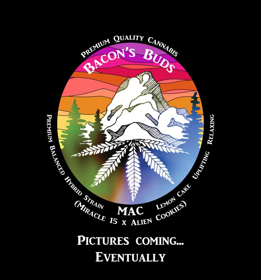 MAC no pic.png