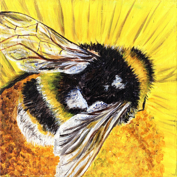 Bumblebee on Sunflower. 10 x 10 inches , £120 , original acrylic on canvas, prints and can