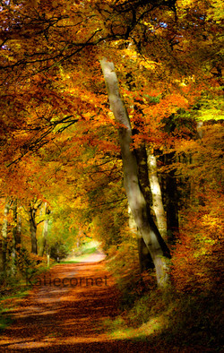 13.Path at Wendover Woods in Autumn