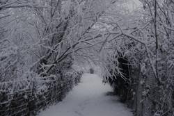 18.Snowy Church Path.